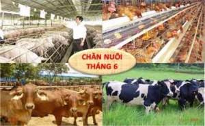 KH. Chan nuoi Viet Nam 6