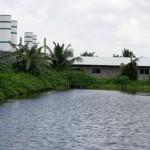 mo-hinh-nuoi-heo-khong-chat-thai-tai-bac-lieu-26-.5637