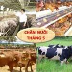 KH. Chan nuoi Viet Nam 5